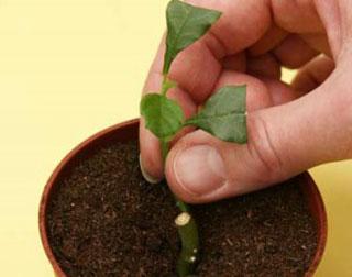 купить семена комнатных растений в интернет магазине с доставкой недорого
