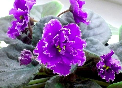 как вырастить цветы из семян комнатные цветы