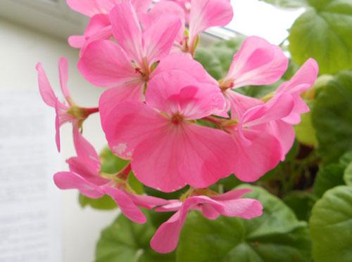 купить семена комнатных растений на украине
