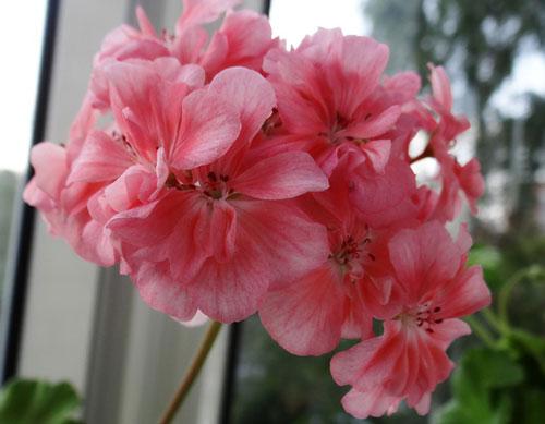 как можно заказать семена комнатных цветов