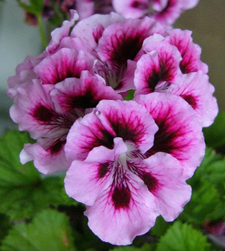 семена комнатных цветов в интернет магазине