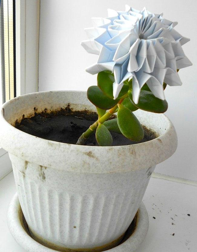 купить семена комнатных растений и цветов в интернет магазине