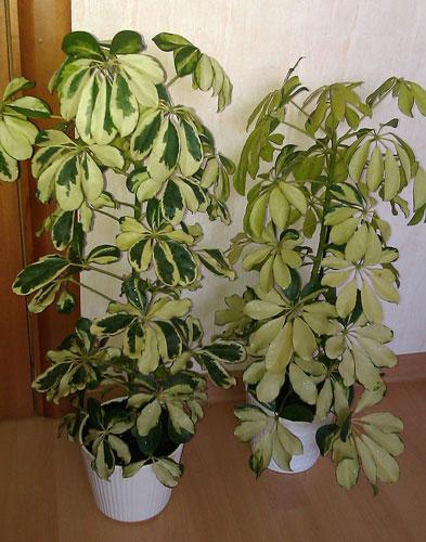 редкие и экзотические комнатные растения из семян