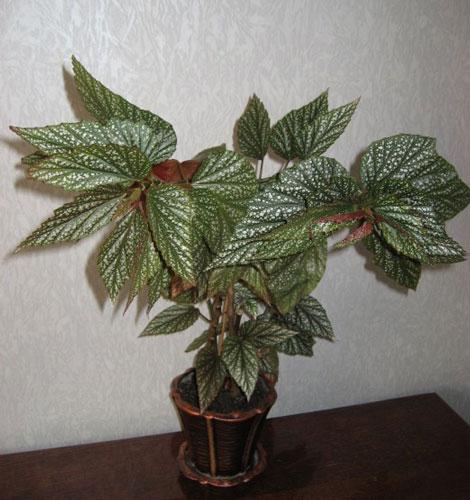 Большие растение
