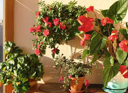 Как выбрать место для растения.