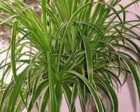 Названия комнатных растений с фото
